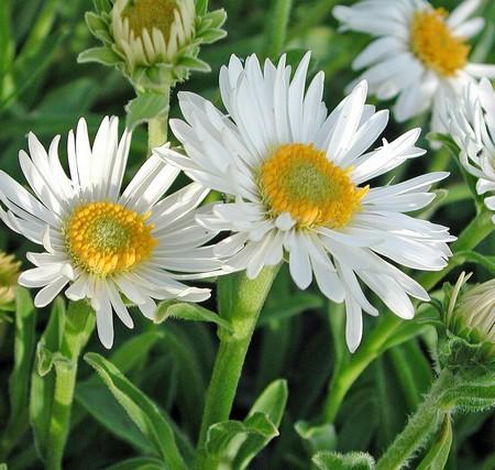 svenska blommor namn