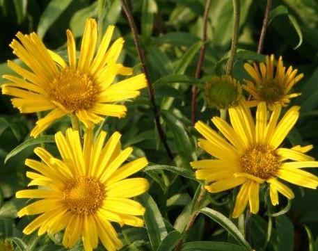 namn på blommor